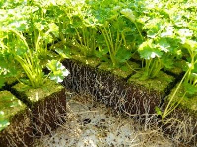 Σποροπαραγωγή – Παραγωγή Φυτωριακού Υλικού Κηπευτικών Και Ανθοκομικών Φυτών