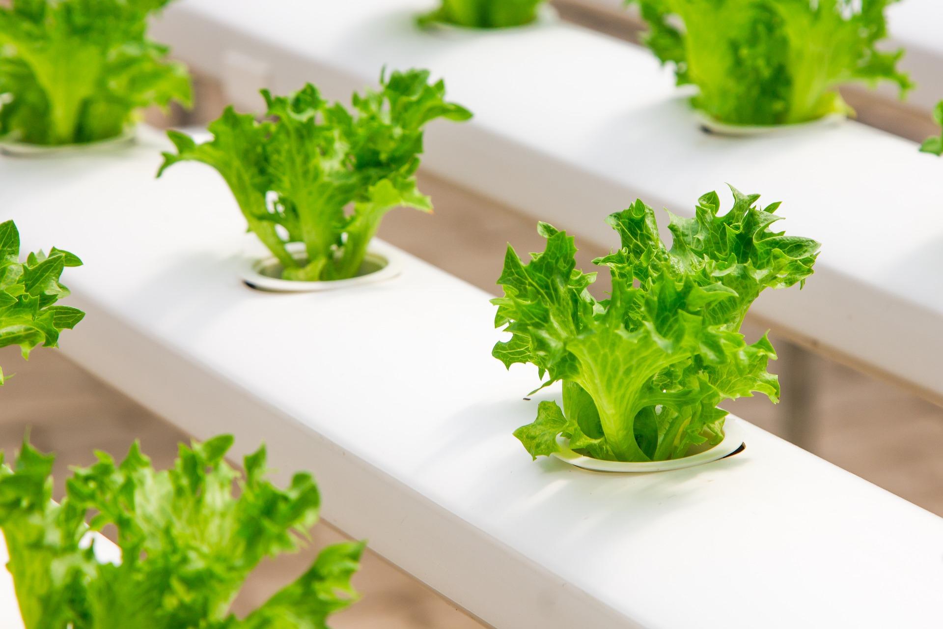 Αρχές Αειφορικής Καλλιέργειας Κηπευτικών
